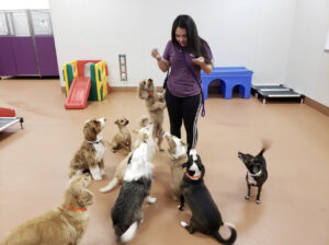 A play coach works with a group of dogs.