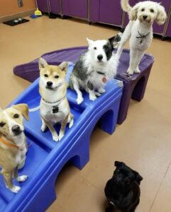 Four dogs sit on a play set.